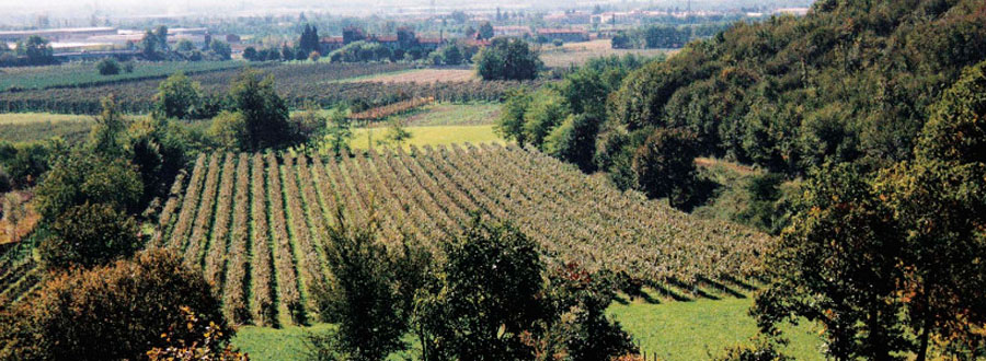 Meet our Producers: La Valle Franciacorta